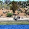 elephants-1364415_960_720.jpg