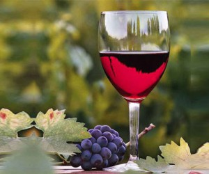 South Africa's wine tourism industry