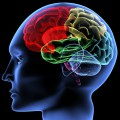 Durban secures neuroscience conference