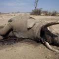 Protecting Hwange's elephants